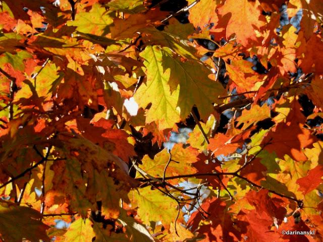 Autumn4 001 - Golden Light
