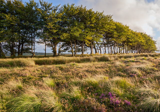 Trees line the moors in Exmoor National Park by Martyn Ferry Photography