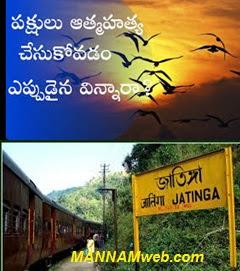 The Mind-Boggling - Mass suicides of birds in Jatinga Valley (Assam)- జతింగా అనే ఈ ప్రదేశంలో పక్షులు ఆత్మా హత్యలు చేసుకుంటాయి.అది ఒక్కసారి జరిగి ఆగిపోలేదు. మళ్లీ మళ్లీ జరుగుతూనే ఉంది.