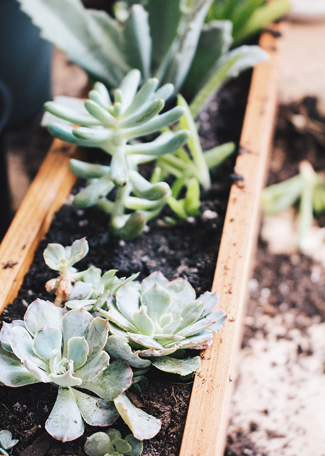 How to properly pot succulents