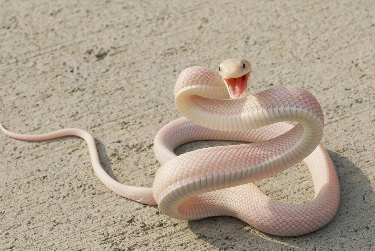 Funny animals of the week - 14 February 2014 (40 pics), albino snake looks happy