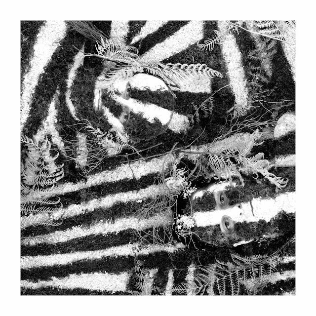 Pari réussi pour le premier album de Blackbird Hill, razzle Dazzle.