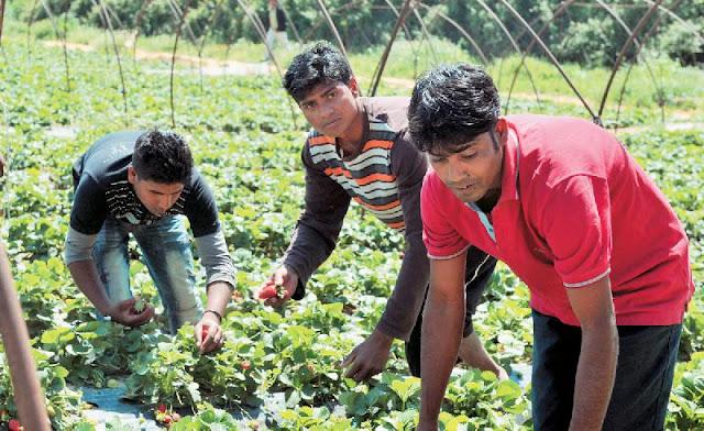 Τέρμα το εργόσημο στα χωράφια - οι αλλοδαποί εργάτες γης στο ΙΚΑ!