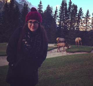 Elk in Banff