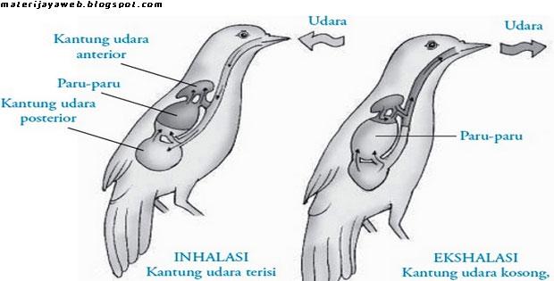 Sistem Pernapasan Hewan