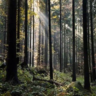 Manfaat Sumber Daya Alam Hutan