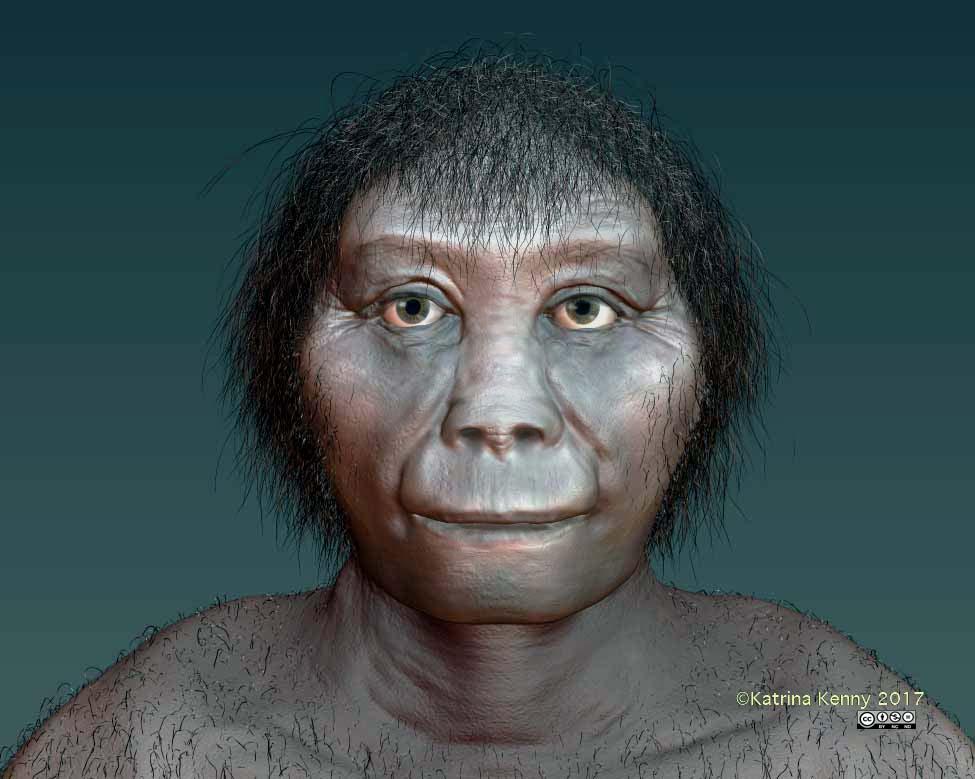 Indonesian 'hobbits' not related to Homo erectus