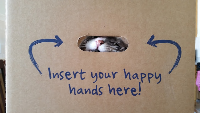 Funny Insert Happy Hands Here Box Cat Picture