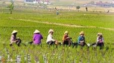 Cara Mudah Menjadi Agen Freelance Produk dan Alat Pertanian Indonesia