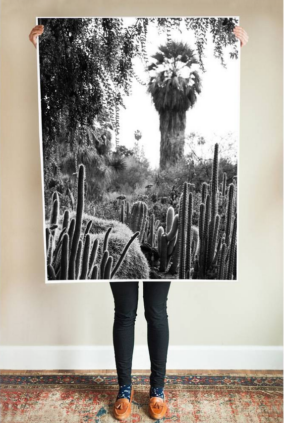 Affordable Art | Large Cacti Series Printable Posters Under $20