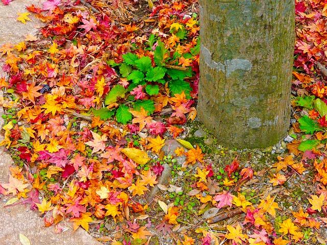 ảnh hoa lá mùa thu đẹp