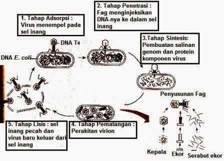 Reproduksi Virus