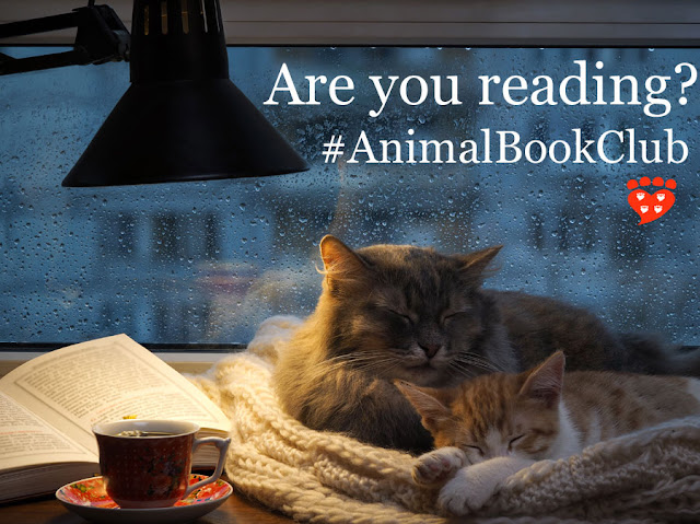 Two sleepy cats, a book and a cup of tea; cosy inside at twilight on a rainy day