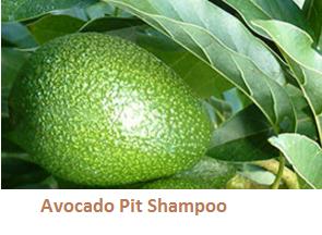 Avocado Pit Shampoo