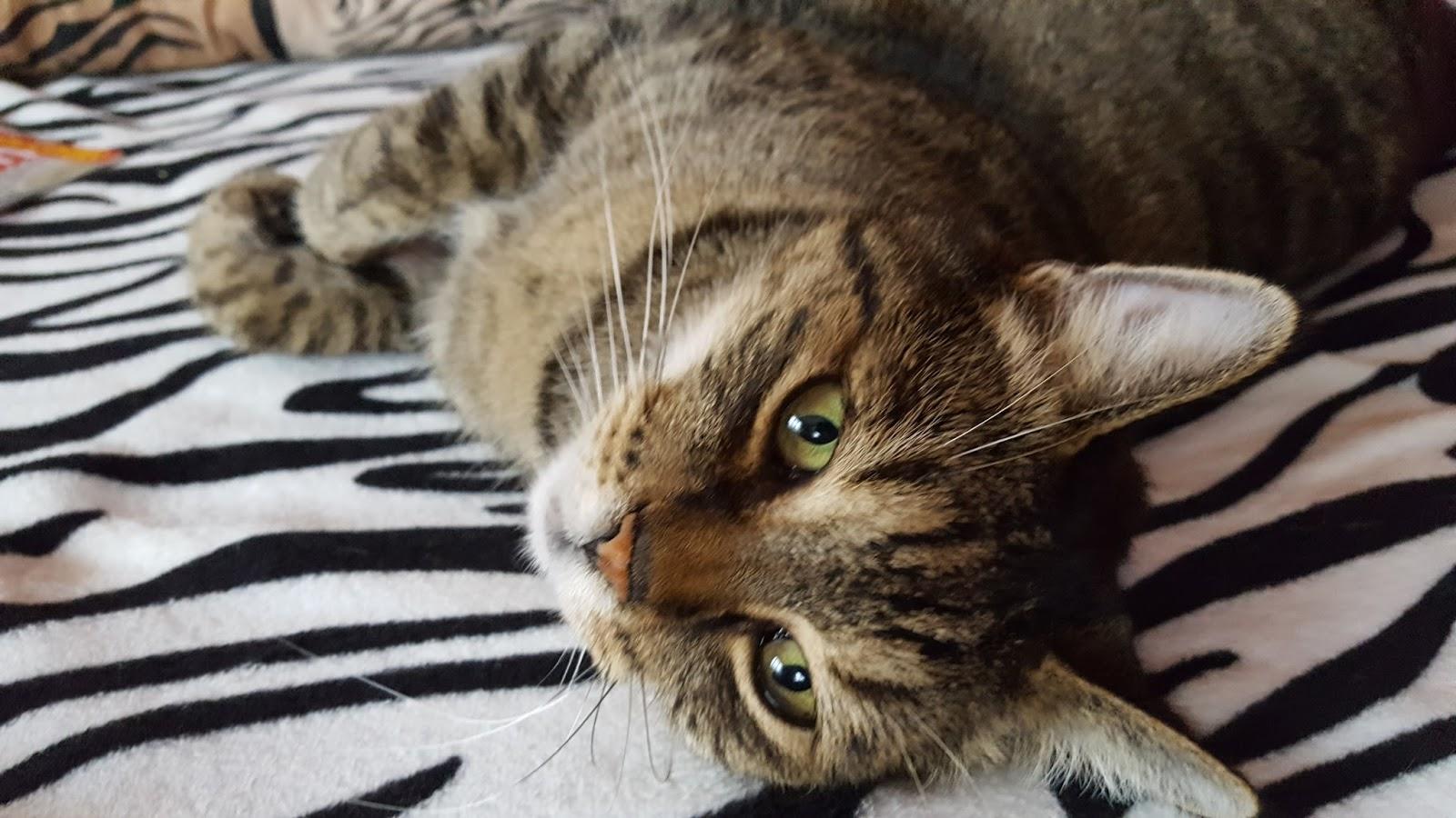 lesbičky kočička třením kočička