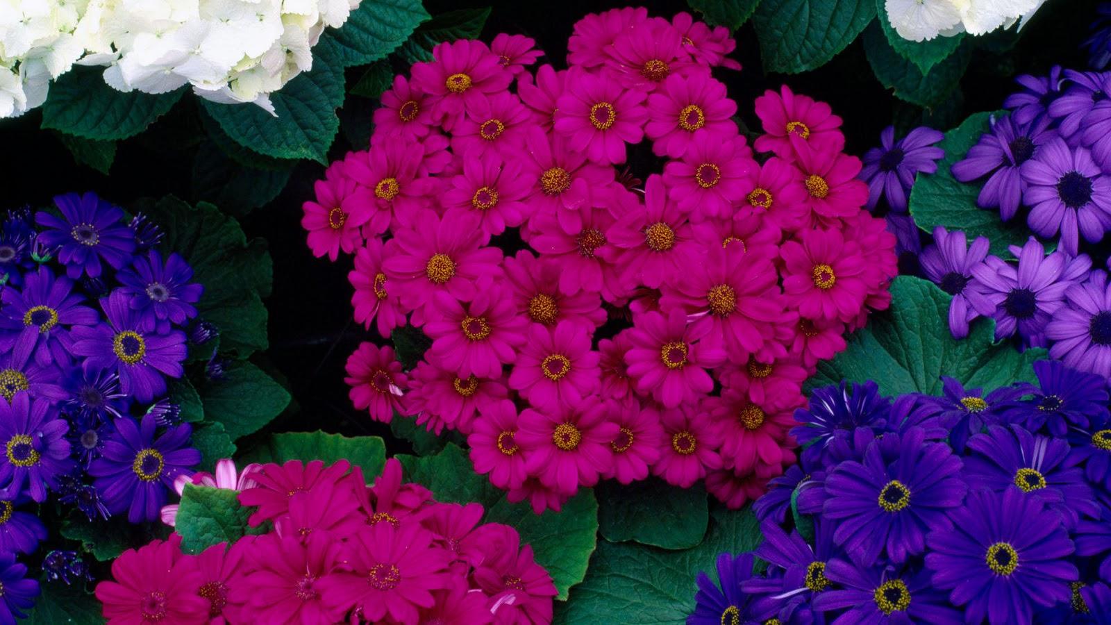 Flowers Wallpapers | HD Wallpapers | Desktop Wallapers | High Definition Wallpapers