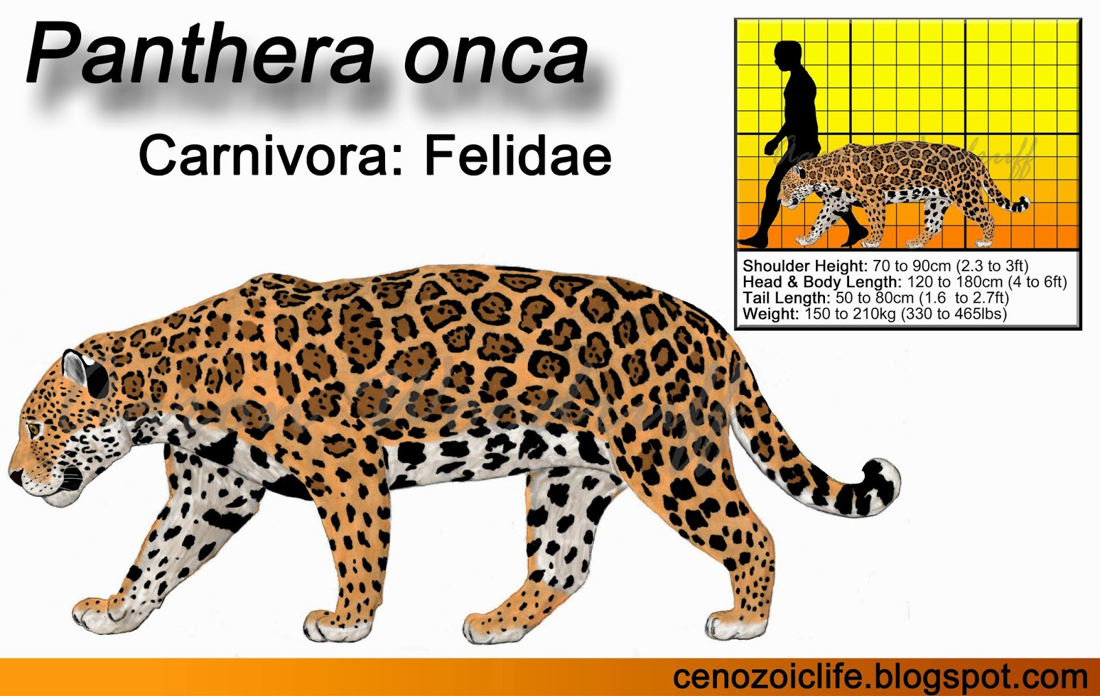 life in the cenozoic era: jaguar (panthera onca)