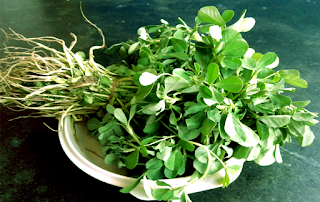 Fenugreek leaves methi leaves