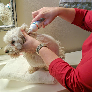 Cleaning my dog's ears myself was Easy Peasy!