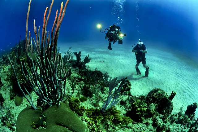Sonidos submarinos en tiempo real