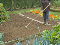 Préparer la terre avant de semer le persil