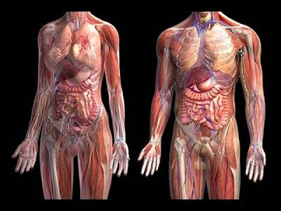¿De qué está hecho el cuerpo humano?