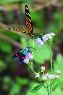 blue moth and butterfly on flower