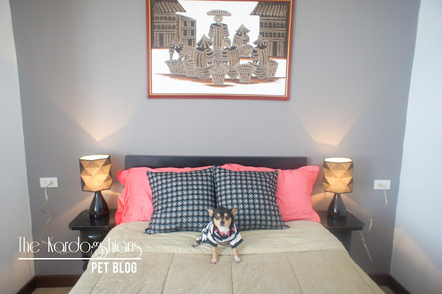 Pet Friendly Airbnb Suite on Baguio City