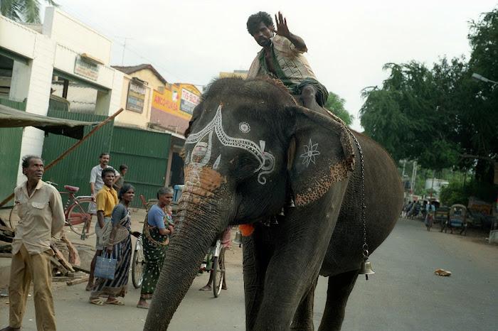 Pondichéry, rue Bharati, éléphant, cornac, © L. Gigout, 1990