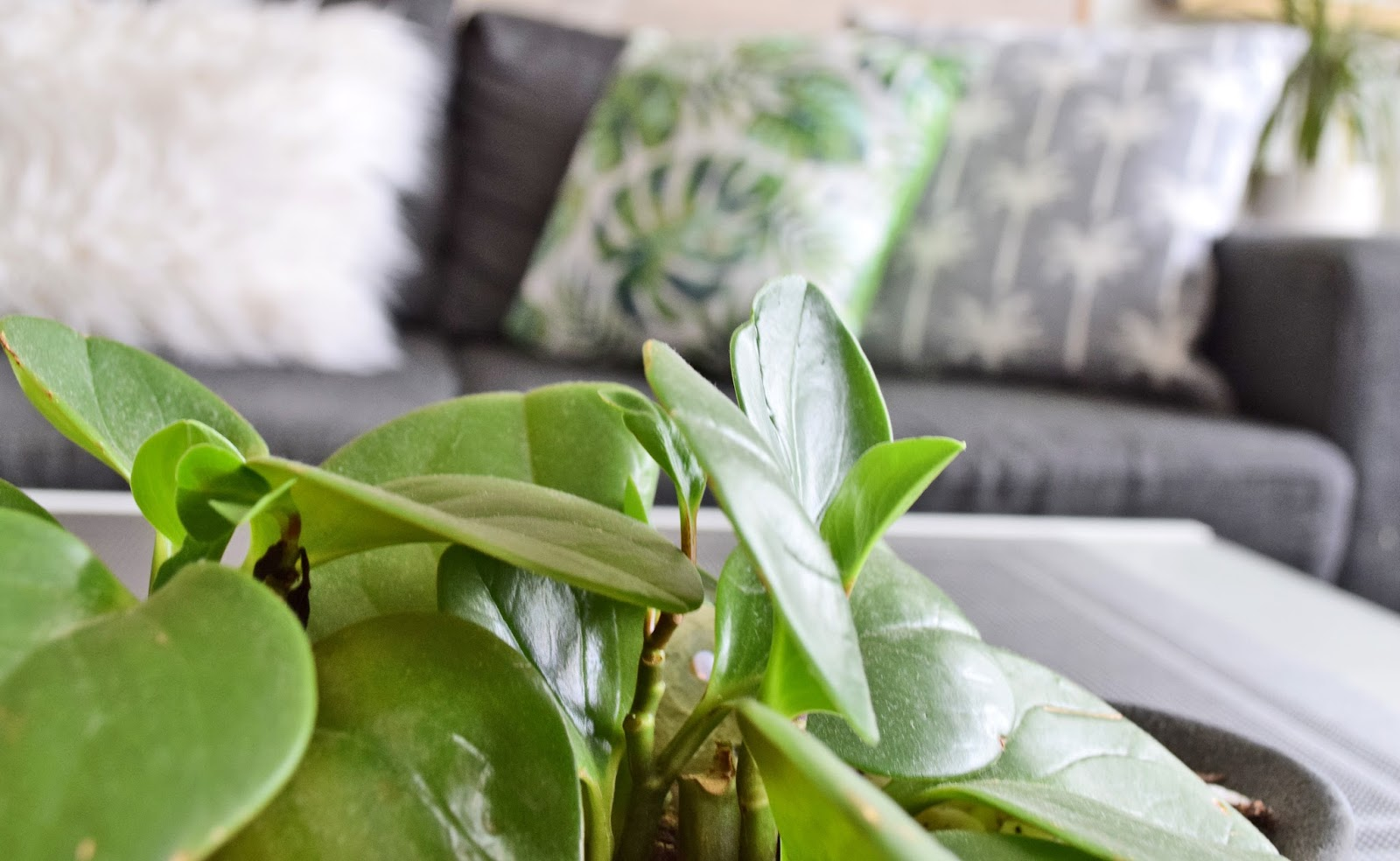 Plants in home decor
