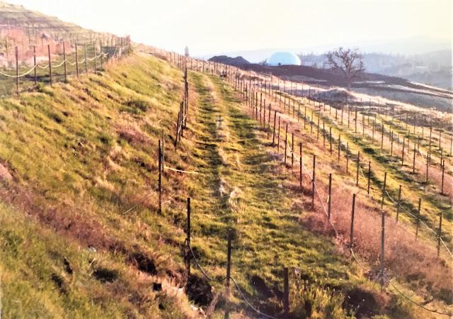 Robert Earl Burton's Fellowship of Friends cult Renaissance Vineyard and Winery