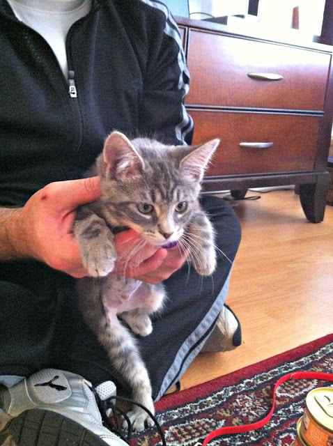 ASPCA, cat in shelter, adopt don't shop
