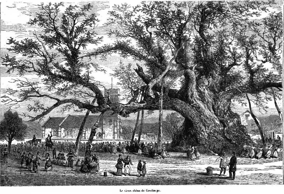 The Cowthorpe Oak