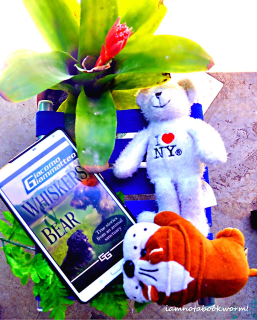 Whiskers and Bear by Giacomo Giammatteo | Blog Tour | Book Review by iamnotabookworm!