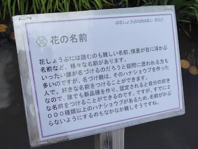 山田池公園 花しょうぶ園 花しょうぶの花の名前解説