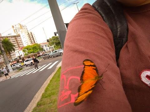 Hoje eu vi uma borboleta