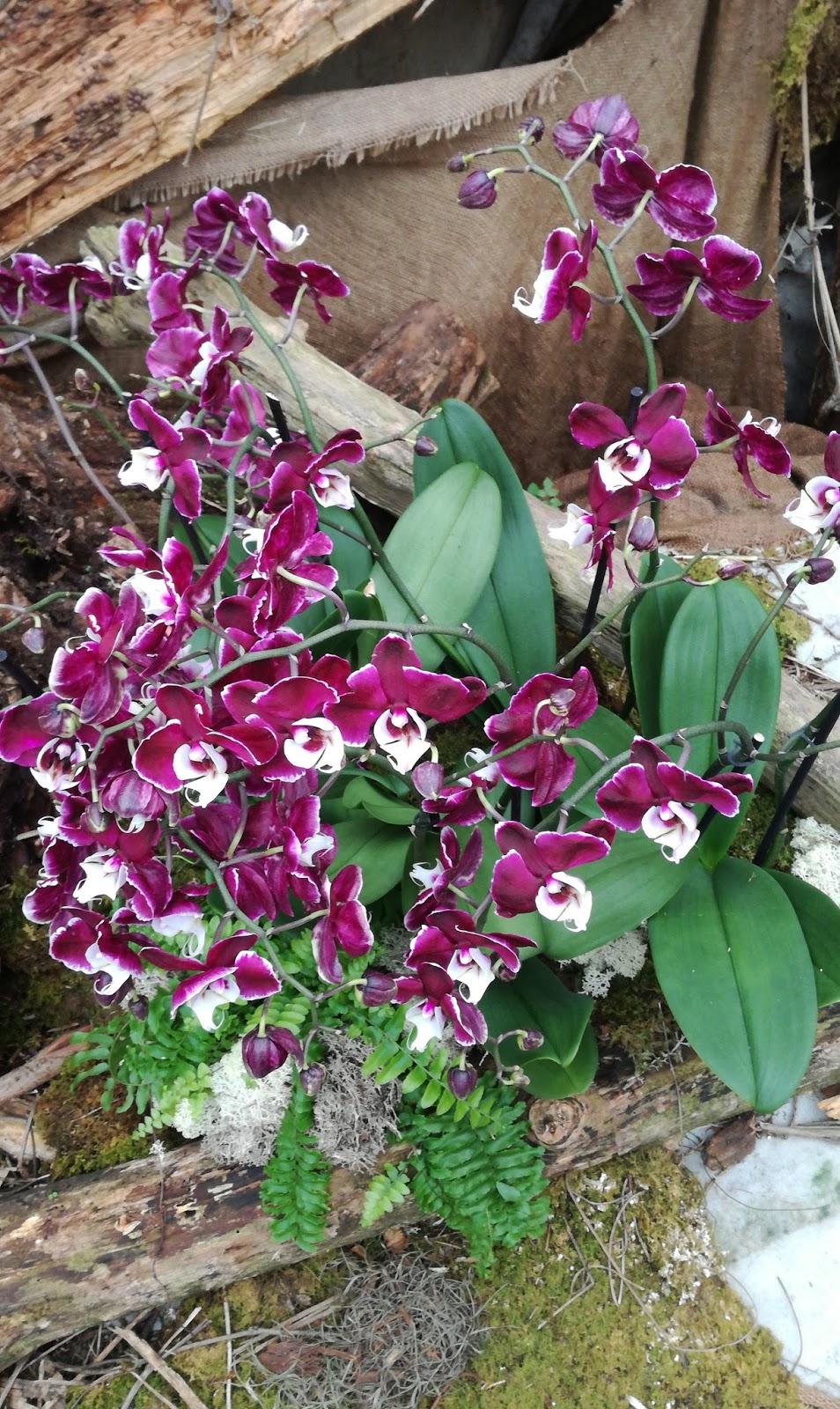 razstava orhideje metulji vrtni center kurbus