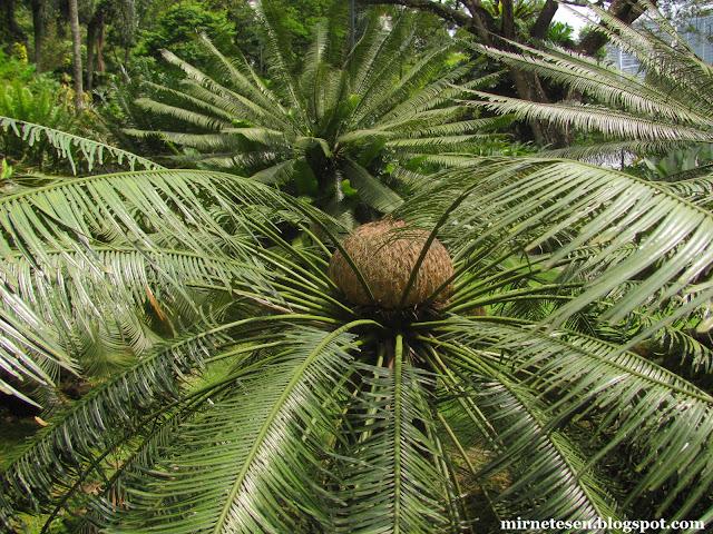 Ботанический сад Пердана в Куала-Лумпуре
