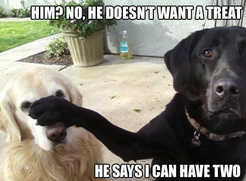 Hilarious Dog pooch Meme Caption Photo