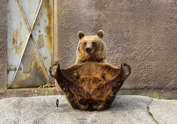 حيوانات تمارس رياضة اليوجا