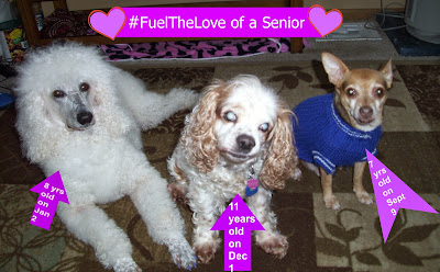 3 senior dogs #FueltheLove