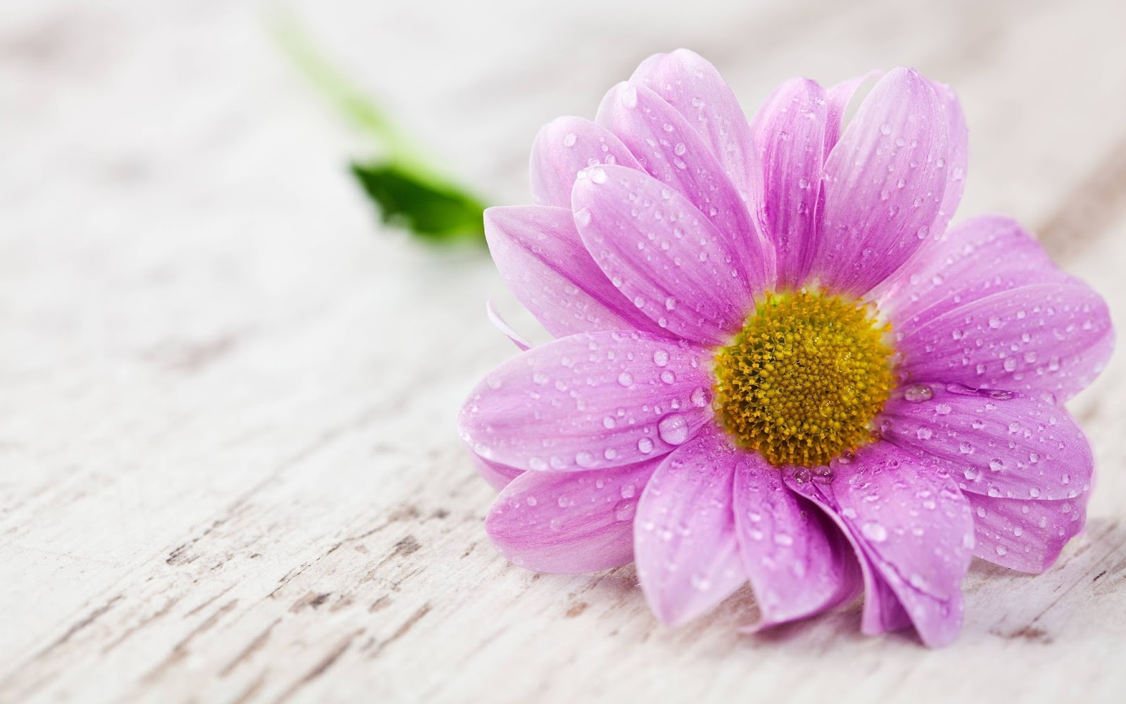 Click find photos all most beautiful photos all you love flowers beautiful flowers with water drops izmirmasajfo