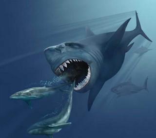 ikan hiu purba megalodon