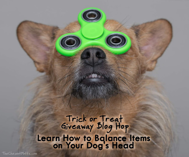 Trick or Treat Giveaway Blog Hop: Learn How to Balance Items on Your Dog's Head
