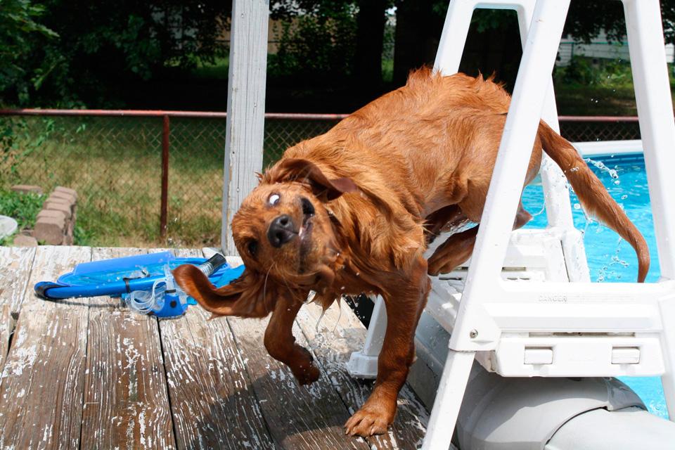 amper bae funny dog face