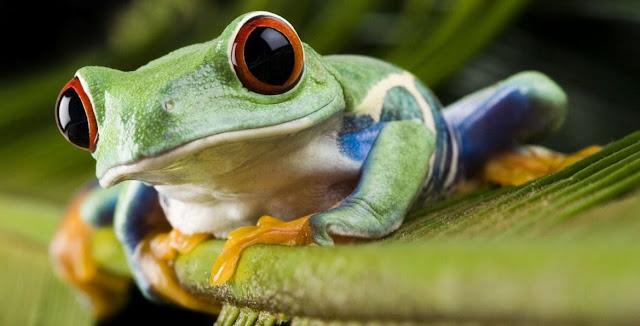 Anfibios y biologia