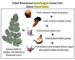 Kandungan daun kelor dan manfaat khasitnya bagi kesehatan