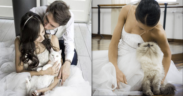 Photographer Takes Wedding Photos of Couples With Their Cats