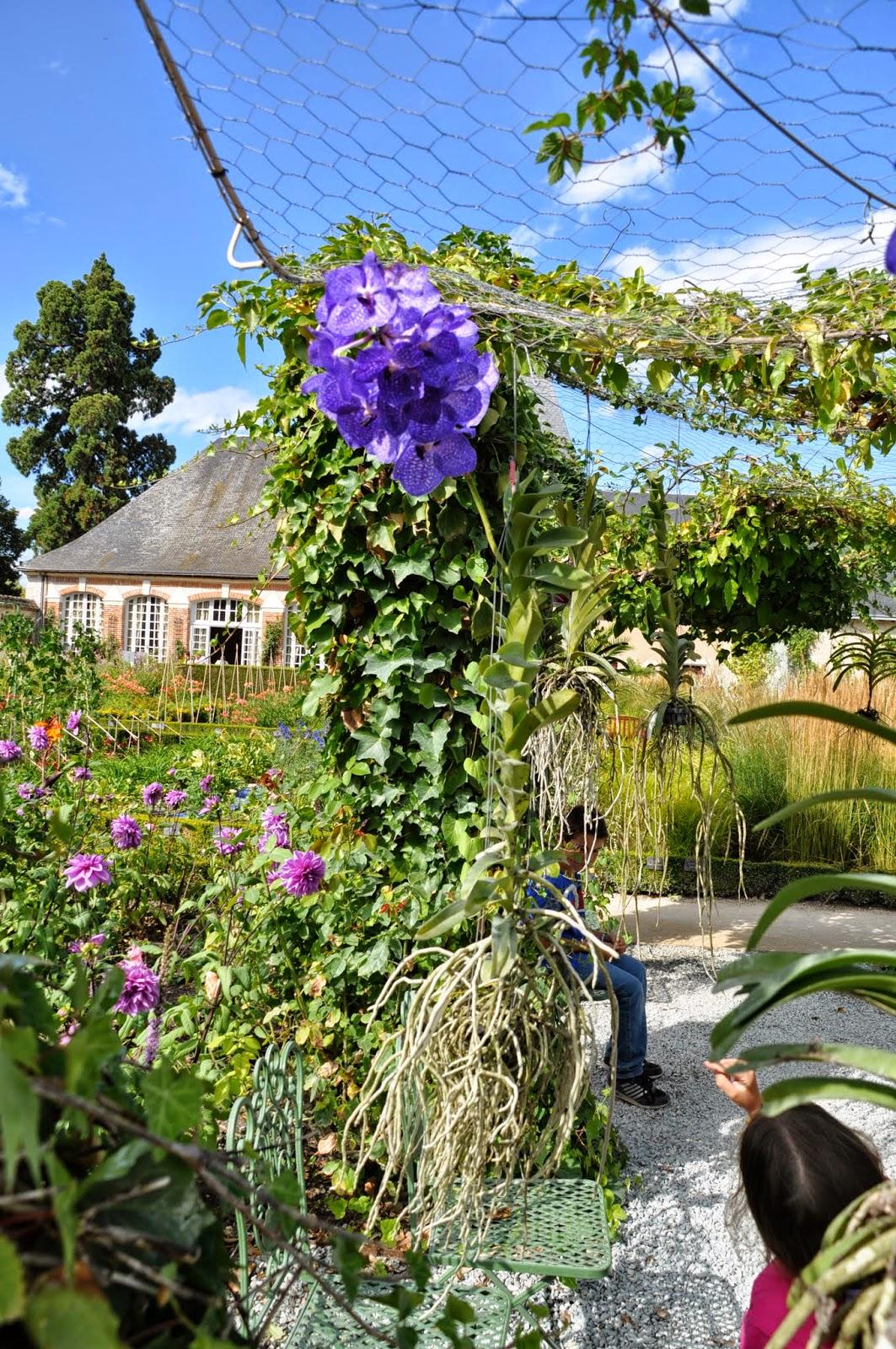 Orchidee nel giardino di Cheverny