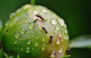 Alasan mengapa Semut Kalau Jalan Berbaris
